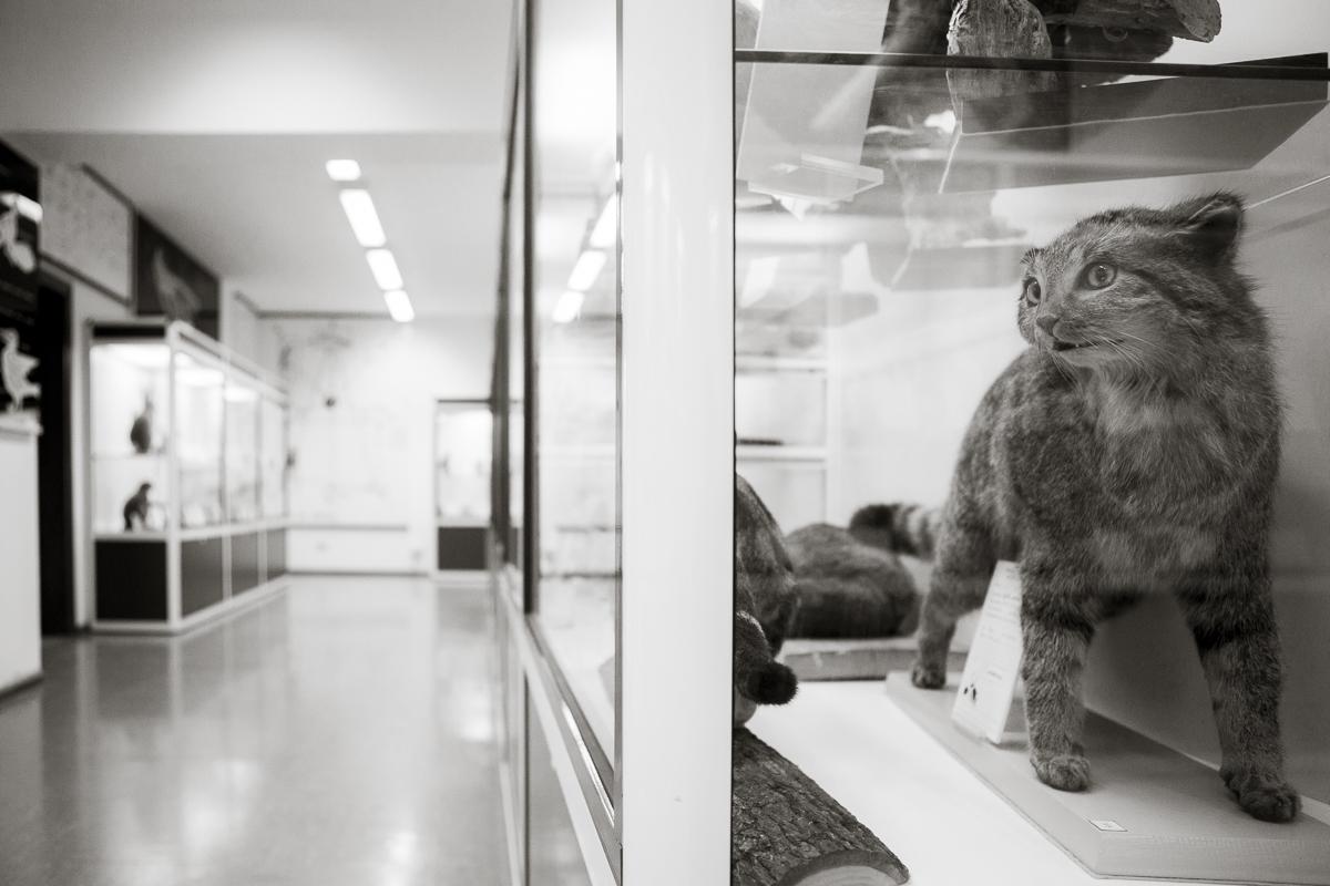 Museo di Storia e Natura